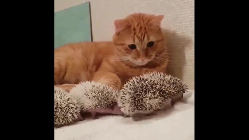 Неее это не мои котята