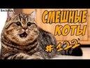Смешные Коты 2018 Кошки До Слёз Приколы с котами и кошками Funny Cats