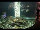 Синай. Шарм-эль-Шейх Красное море. Рыбы.