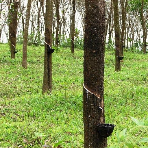 Nico альбом herb tree hertz toe
