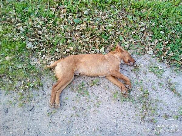 Ехали с подругой на велосипедах по дороге, видим - лежит собака, мертвая!