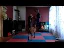 Чхарек бой с собакой 2!!Самое смешное видео в мире