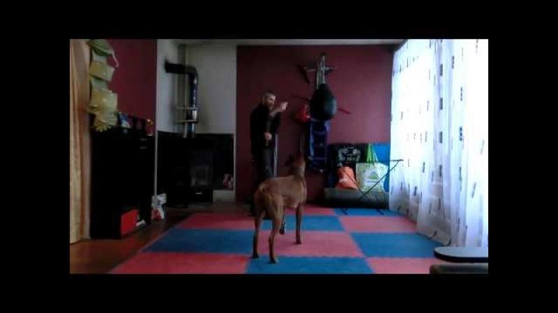 Чхарек бой с собакой 2!!))Самое смешное видео в мире