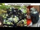 Наливка из винограда Изабелла