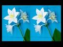 How to make Crepe paper Flowers Amazon Lily Eucharis grandiflora flower 231