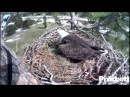 SWFLEagles~FIRST EGG For Season 3 at 2.07pm~11-19-2014
