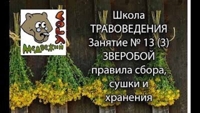 Школа травоведения - Занятие № 13(3) ЗВЕРОБОЙ правила сбора, сушки и хранения