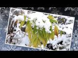 Первый снег   Рома Жуков