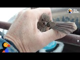 Bird Frozen To Metal Fence Rescued by Kind Man The Dodo