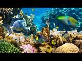 Коралловый риф в 4К