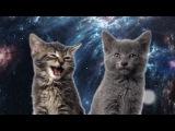 Песня мяу, мяу - часовая версия Space Cats 1 hour version