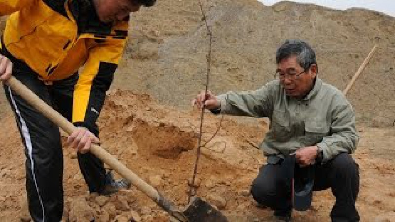Japanese man plants 10 million trees in N China in 24 years