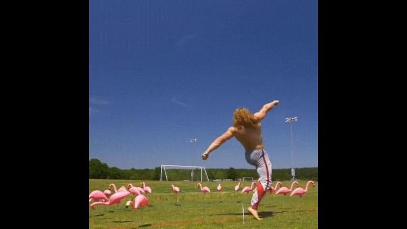 фламинго vs качЕк