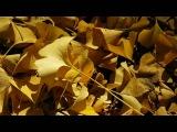Маленький принц - Осень (1994) хит диско 80 90 ретро мираж Нэнси 2000 клип