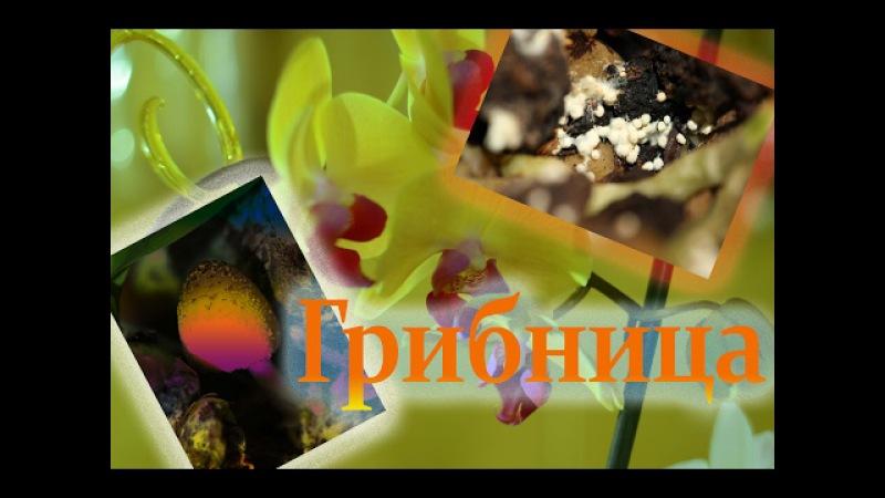 Phalaenopsis/ Корни задыхаются/ Почвенные грибы