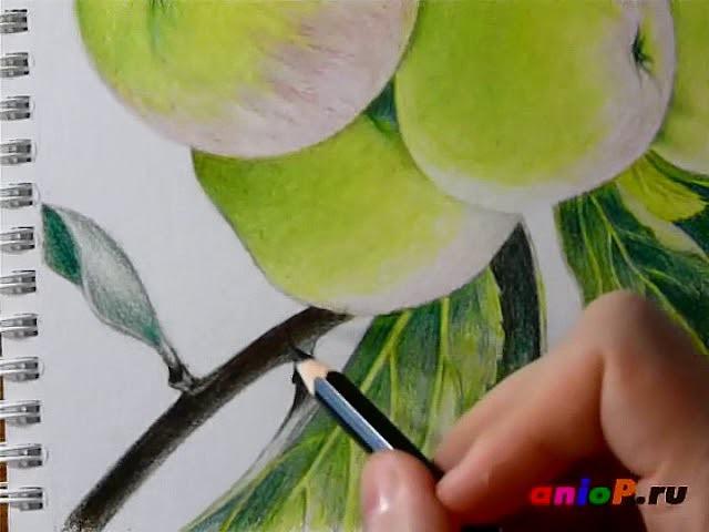 Рисуем зеленые яблоки цветными карандашами. Часть 6