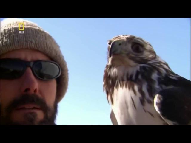 Дикая природа Сила хищных птиц Документальный фильм National Geographic lbrfz ghbhjlf cbkf [boys[ gnbw ljrevtynfkmysq abkm