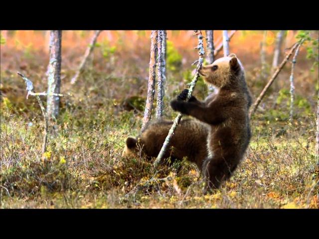 Дикая природа Скандинавии - Финляндия (1080)