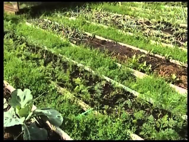 Чаллы ТВ - Удачный сезон - Кому лень копаться в огороде