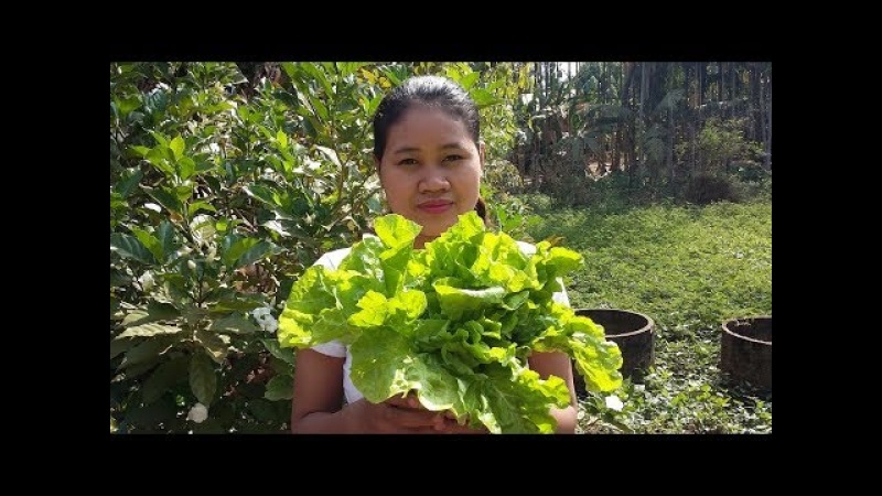 Awesome Cooking Soup Cabbage W/ Fish Balls Recipe - Cook Fish Recipes - Village Food Factory