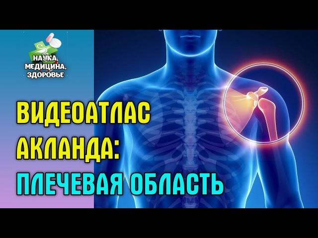 Анатомия человека. Видеоатлас доктора Акланда. Плечевая область