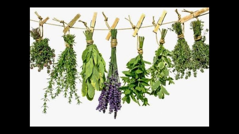 О самом главном: Лекарственные травы, речные раки, отит