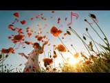 Beautiful Piano Music Relaxing Music, Romantic Music, Sleep Music, Study Music