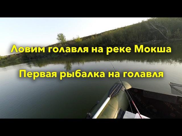 Рыбалка на Мокше на голавля и щуку