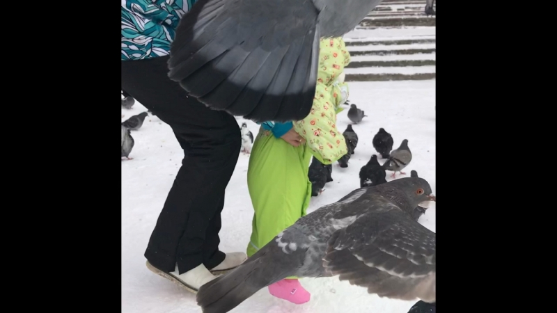 Настя и голуби 😂