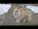 Кот ищет дом
