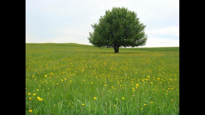 Пение птиц на моей поляне