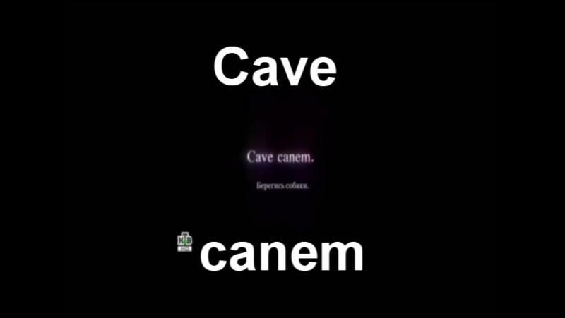 94) Cave canem