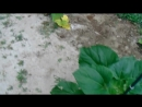 DESPITE MONSANTO CHEMTRAILS 2017 Heirloom Garden