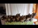 Синхронные котята (6 sec)