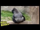 зеленая миля kino remix пародия 2018 фильм драма до слез горилла gorillaz угар ржака смешные приколы с животными трехочковый