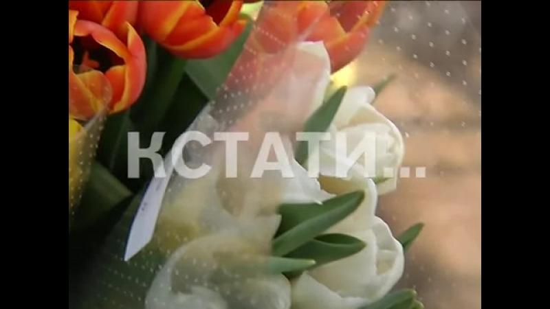 Кстати Новости Нижнего новгорода - Цветочный ажиотаж в Нижнем Новгороде