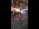 Международный турнир по Вольной Борьбе на призы А.А. Шумилина