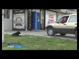 Опасные беспризорники. В Бутурлиновке начали отлов бездомных собак