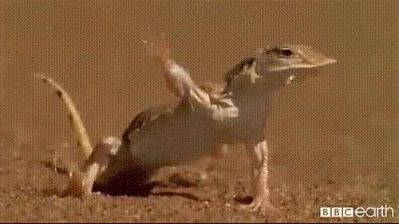Ах ты ж.. ёшкин кот.. песок горячий! :)