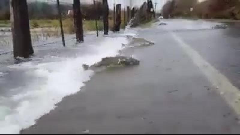 рыба плавающая против течения ..