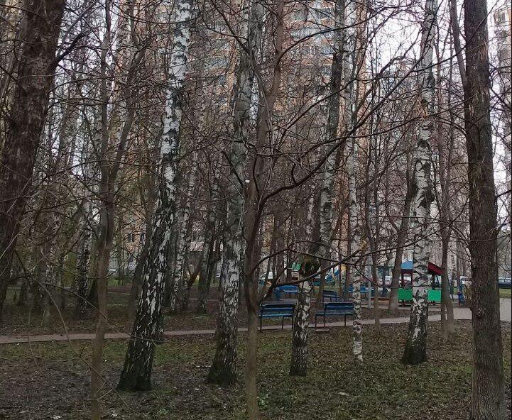 Сломанные ветки удалили с деревьев в сквере «Березовая роща»