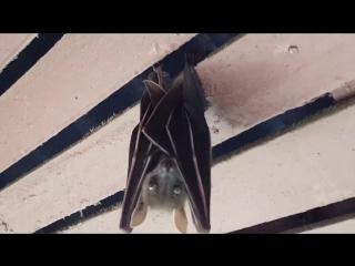 Бэтмен под крышей бунгало