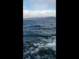 Горбатые киты залив Самана