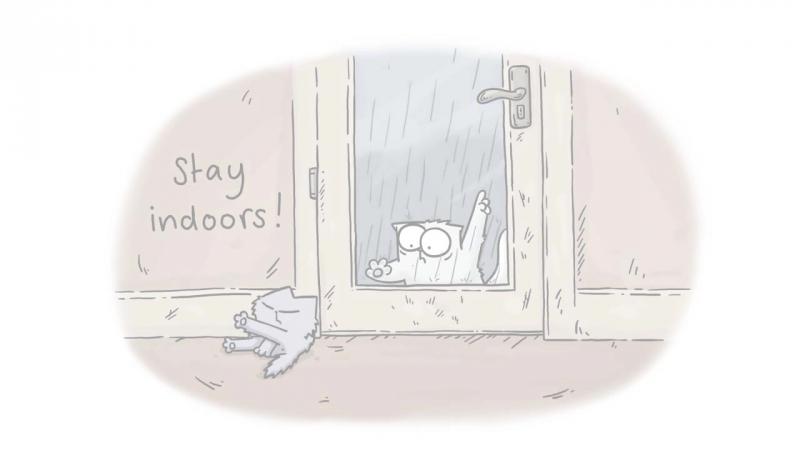 Кот Саймон(всякое бывает)