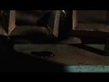 Beetlejuice-и таракан