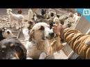 Приютил 200 собак