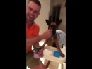 Puppy sat in a high chair being fed