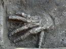 Американские археологи нашли города Содом и Гоморра уничтоженные магматически
