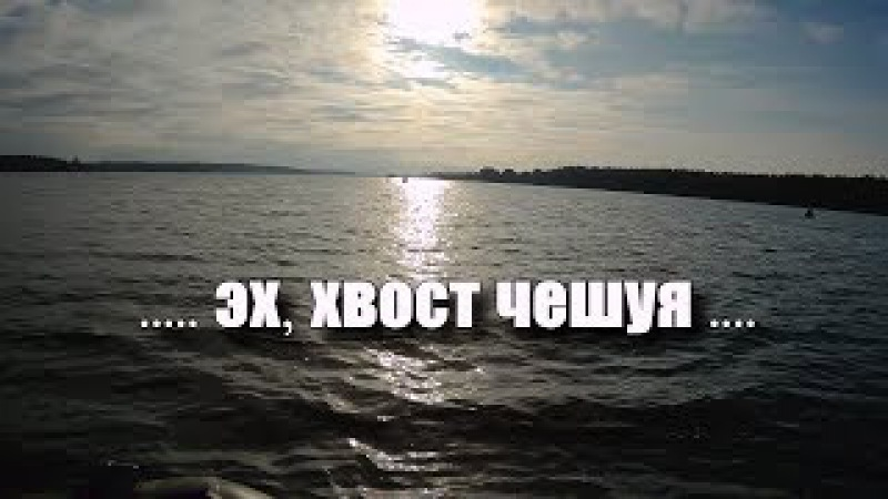 Эх, хвост чешуя! Краткий отчёт с рыбалки. Волга, Белый городок
