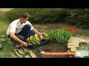 Цветы посадка однолетников рассадой